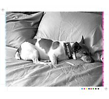 Jack in the bed Photographic Print