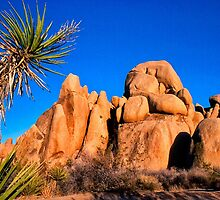 Joshua Tree by cclaude