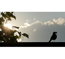 Early bird gets the worm Photographic Print