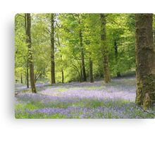 Bluebells at Brathay woods Ambleside. Canvas Print