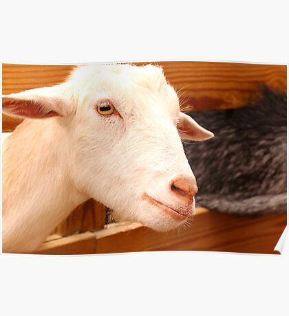A Proud Goat Poster