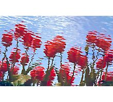 Reflected Tulips Photographic Print