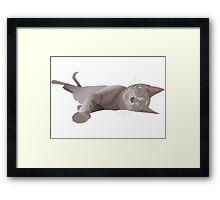 Sleepy cat Framed Print
