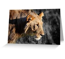 Madikwe Lions Young Pretenders 3 Greeting Card