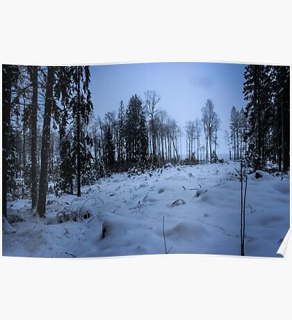 Swedish Forest In Winter VI Poster