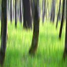 Wald im Frühling by Martina Cross