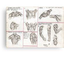 Human Anatomy 3 Canvas Print