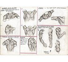 Human Anatomy 3 Photographic Print