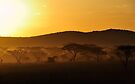 """""""The Gold of the Serengeti"""" by Andreas Koerner"""