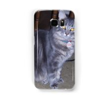 A Silver Maine Coon Kitten Samsung Galaxy Case/Skin