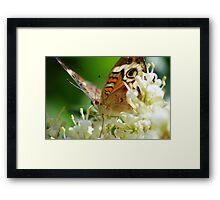 Butterfly album, butterfly Nr.1 Framed Print