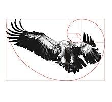 Sacred Vulture Photographic Print