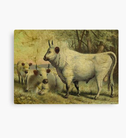 The Cows Came Home Canvas Print