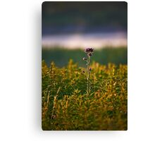 """Thistle"" Canvas Print"
