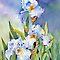 The Beauty of Iris