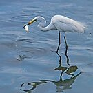 Great Egret with Morning Catch by DonMc