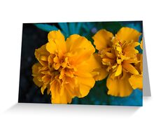 Spring Flower Series 60 Greeting Card