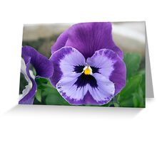 Spring Flower Series 64 Greeting Card