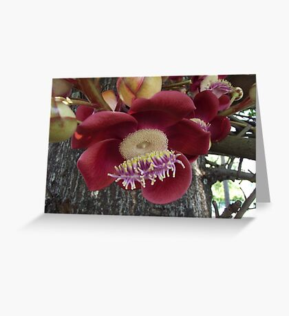 Flower on a tree Greeting Card