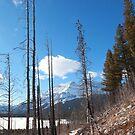 Minnewanka trail by zumi