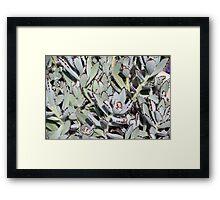 Longwood Gardens - Spring Series 149 Framed Print