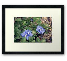 Longwood Gardens - Spring Series 158 Framed Print