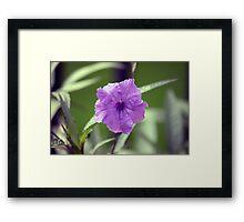 Longwood Gardens - Spring Series 160 Framed Print