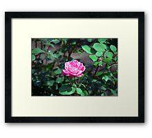 Longwood Gardens - Spring Series 178 Framed Print