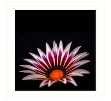 Big Kiss White Flame Flower Art Print