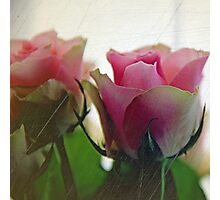 Candy Floss - Pink Roses (Square) Photographic Print