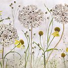 Alliums and Heleniums by Mandy Disher