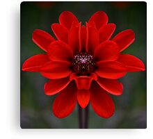 Red Flower - Digitally Altered Photography Canvas Print