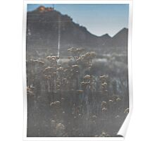 Desert Flowers in the Sunset Distressed Vintage Photography Poster