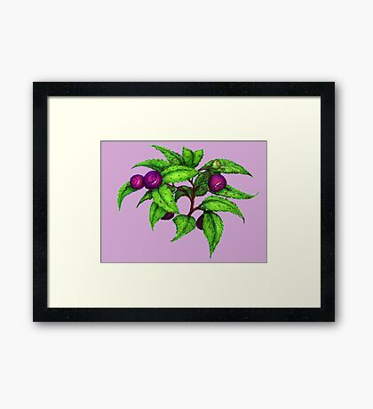 Huckleberries Framed Print