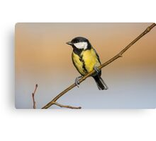 Great Tit  Canvas Print