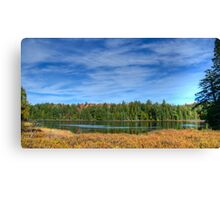 Forest under blue sky Canvas Print