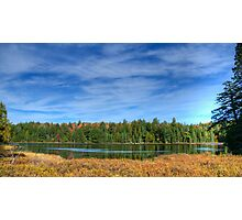 Forest under blue sky Photographic Print