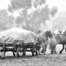 Wagon Team by julie anne  grattan