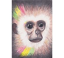 Island Monkey Photographic Print