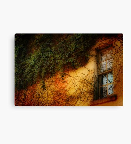 Window Grown Over Canvas Print
