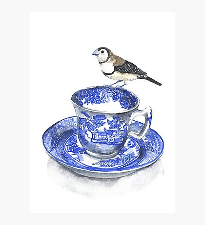 High Tea Double Barred Finch Photographic Print