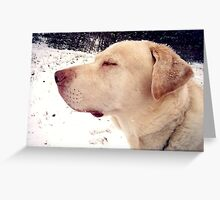 Peaceful Puppy Greeting Card