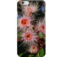 Eucalyptus flowers iPhone Case/Skin