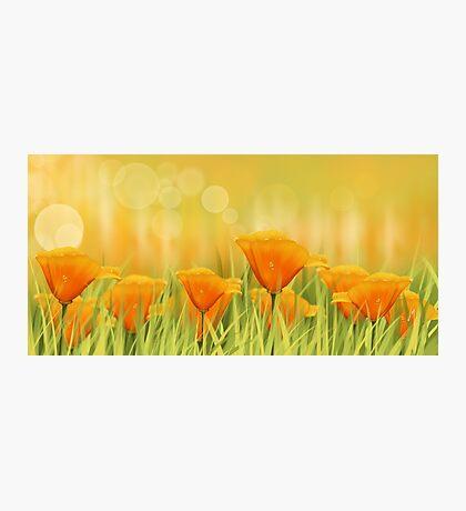 Orange field Photographic Print
