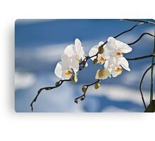Snowy Orchids Canvas Print