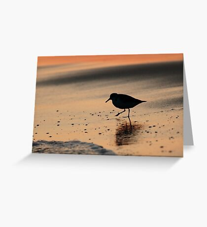 Sandpiper Silhouette Greeting Card
