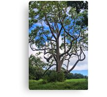 A Tree In Paradise Canvas Print
