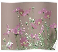 Delicate Pink Floral Poster