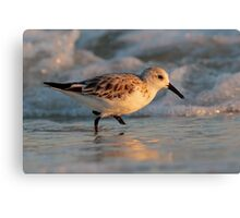 Dancing with the Surf Canvas Print