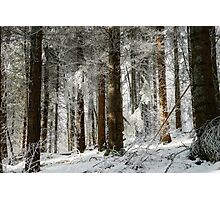 Beautiful icy forest lanscape view, winter time Photographic Print